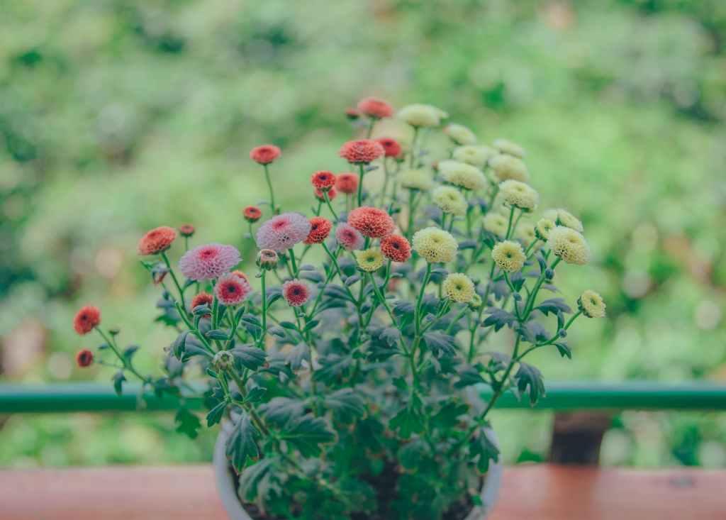 Ikebana - flower centerpiece - best arrangement