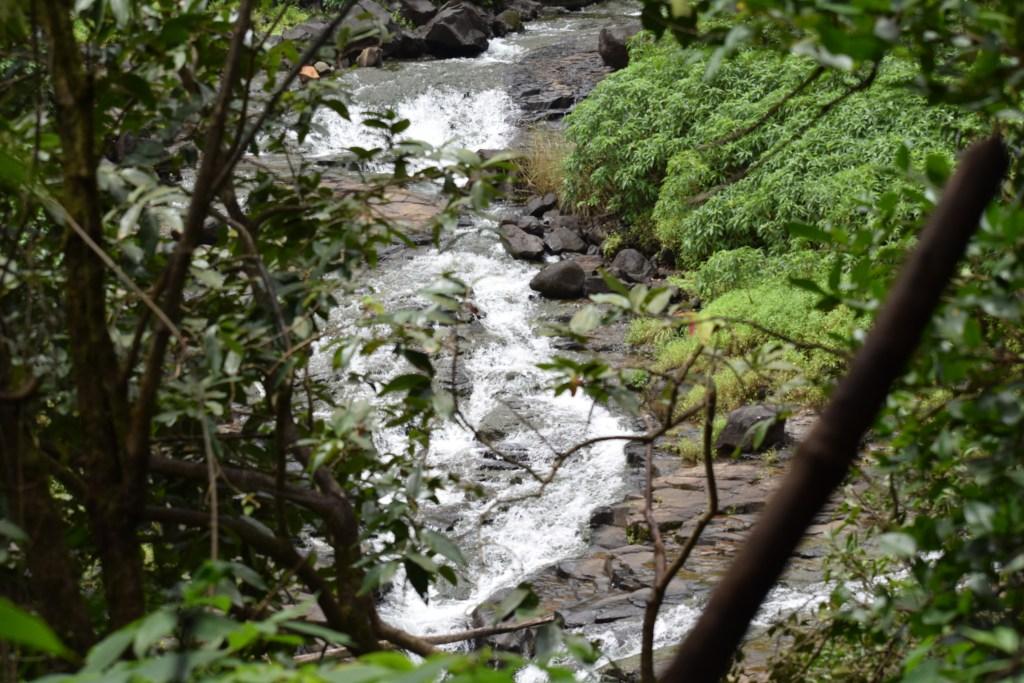 DSC 0516 Andharban Jungle trek Pune