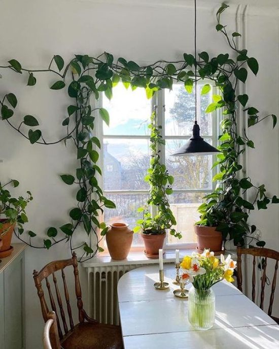 Easy-To-Grow Plants For Busy Students