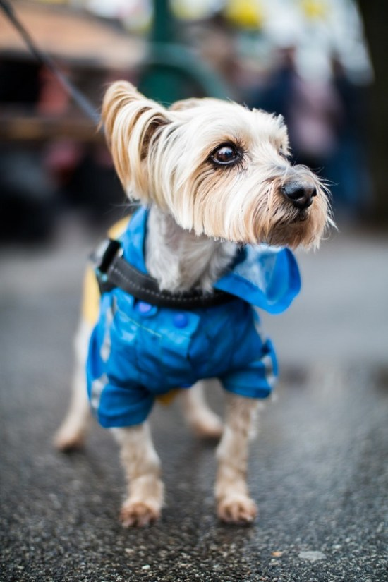 7 Ways To Up Your Dog's Style