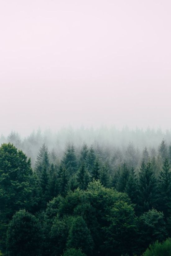 All The Reasons Why You Need To Try Forest Bathing Instead Of Just Meditating