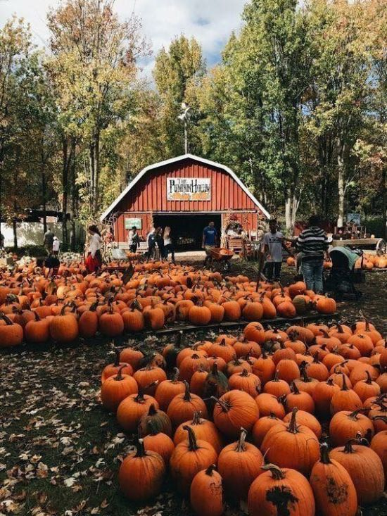 Your Ultimate Fall Bucket List For 2019