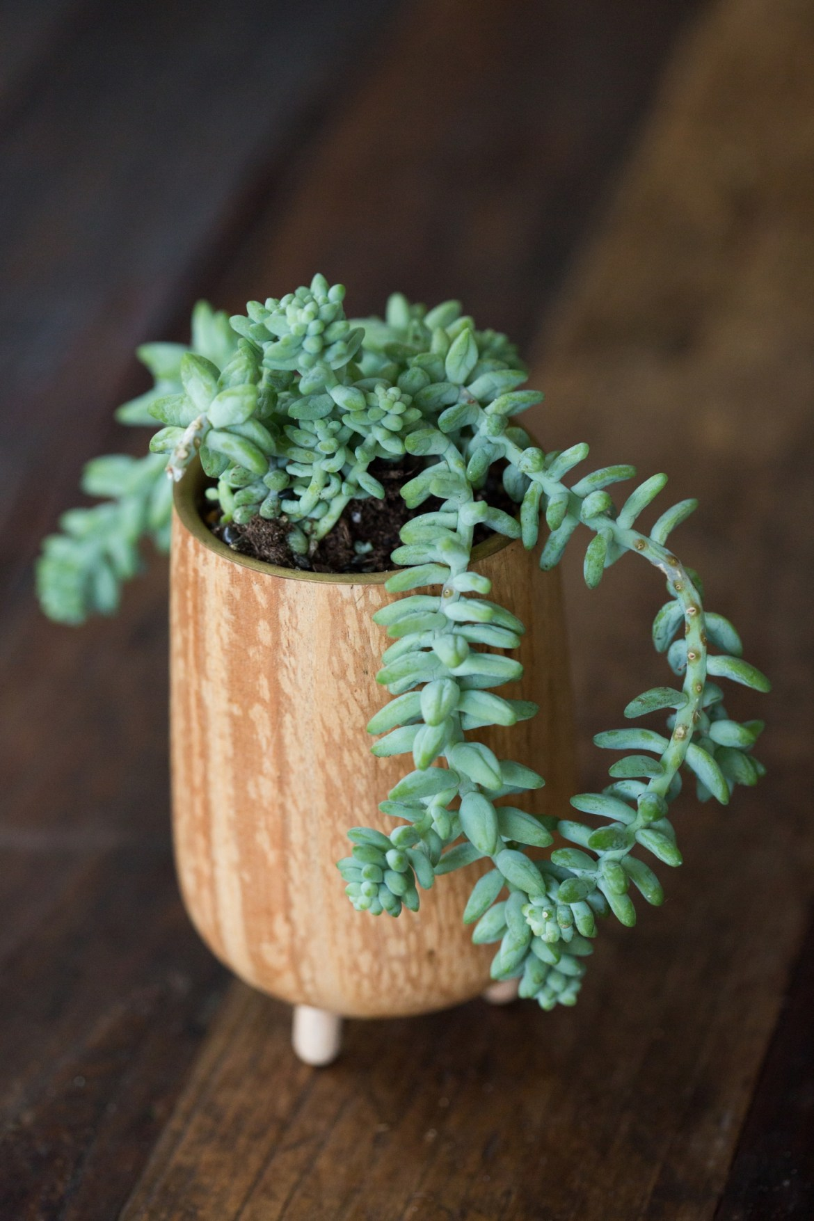 What Succulent You Should Get Based On Your Zodiac Sign