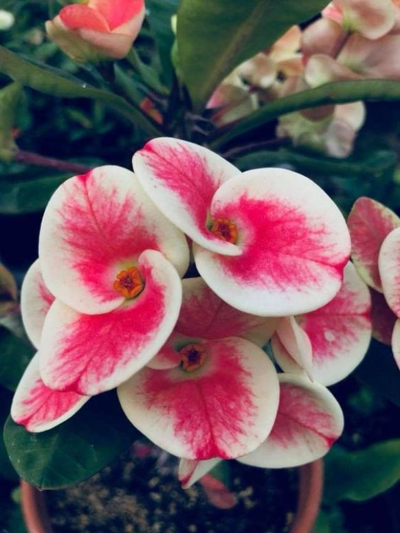 10 Easy To Maintain Plants For The Unskilled Gardener
