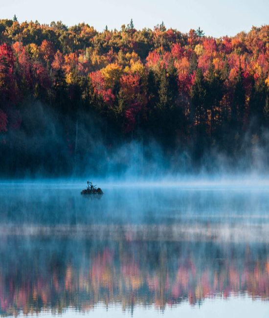 How To Take The Best Fall Foliage Pics For Your Insta