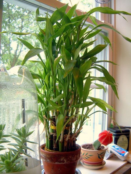 15 Low Light House Plants For Dark Rooms
