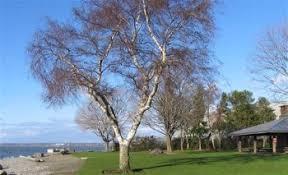 The Cutest Parks In Bellingham, Washington