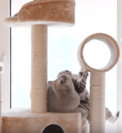 20 Videos of Cute Cats To Brighten Your Day