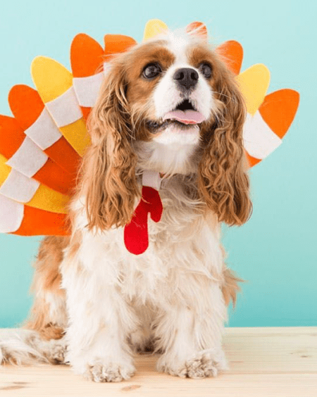 The Most Adorable Thanksgiving Backgrounds You Can Set On Your Phone