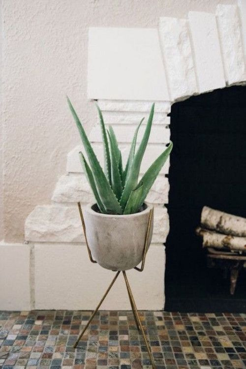 12 Household Plants That Are Hard To Kill