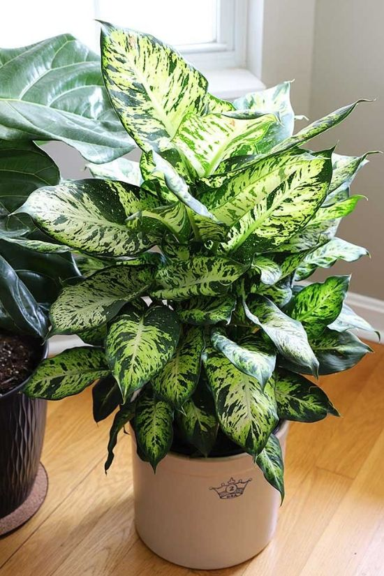 18 Best Indoor Plants That Will Liven Up Your Space