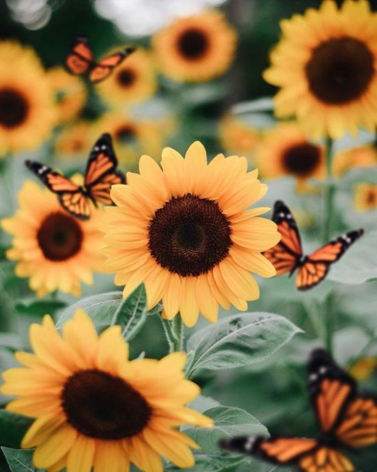 Flowers You Need To Plant In Your Garden Based On Your Zodiac