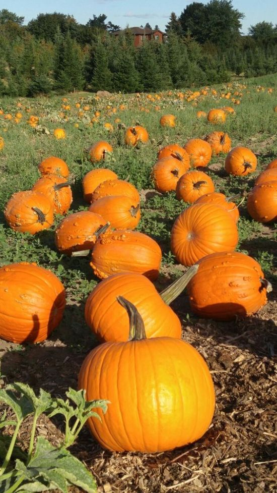 Amazing Pumpkin Patches In Ontario You Have To Visit This Fall