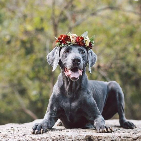 What Dog Breed Best Matches Your Zodiac Sign
