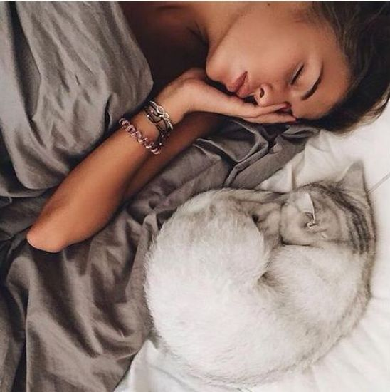 10 Reasons Why Cats Make The Best Pets
