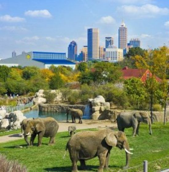 10 things to do in Denver during your trip.