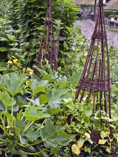 10 Fruits & Veggies That Have To Be Planted In Your Garden This Summer