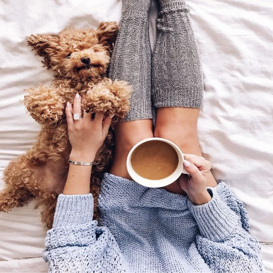 10 Reasons Why Having A Pet Is Necessary When Single