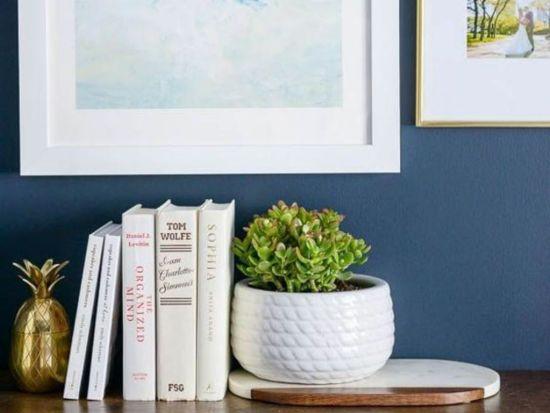 8 Low Maintenance Plants To Brighten Your Student Bedroom
