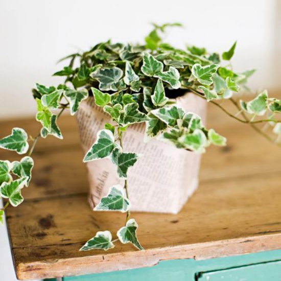 The Ultimate Plant Guide If You Have Zero Green Thumb Talent