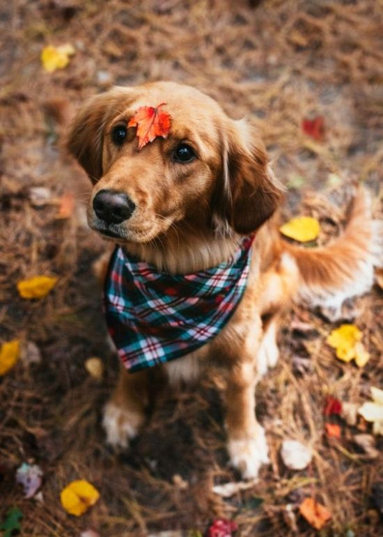 Your Ideal Dog Based On Your Zodiac Sign
