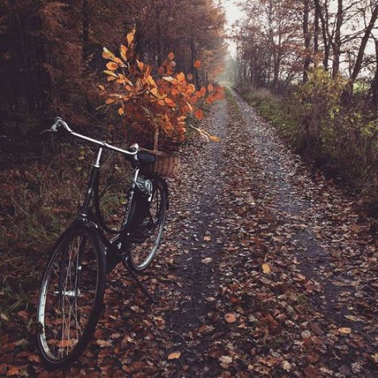 The Best Fall Activities For Adults To Enjoy The Season
