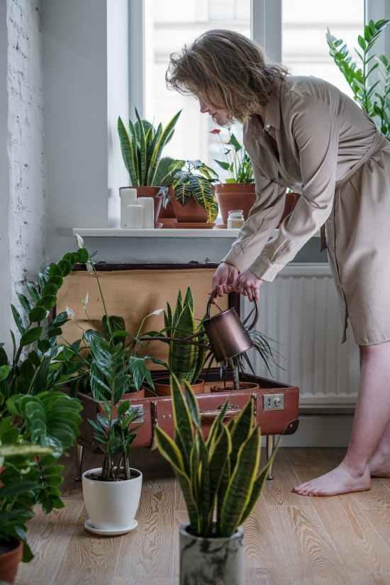 10 Gardening Techniques For Beginners