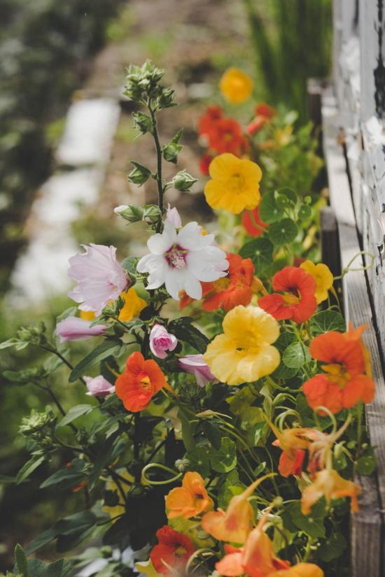 8 Edible Flowers To Make Your Meals Restaurant Like