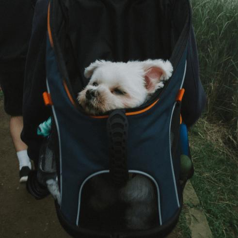 Top 5 Prettiest Yet Practical Dog Accessories