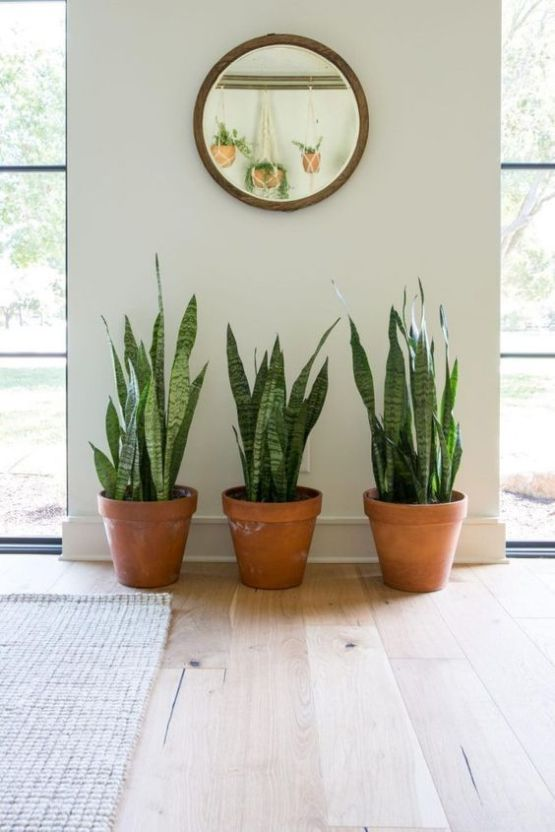 The Best Plants For Your Dorm Room
