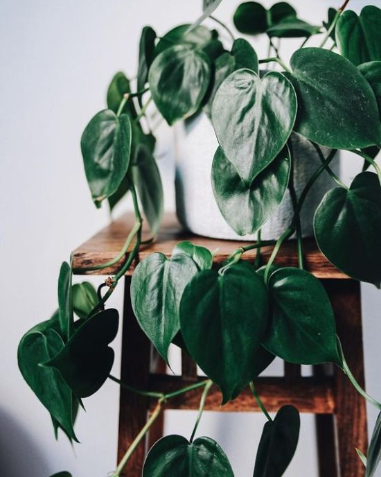 7 Plants That Will Survive Perfectly In Your Dorm