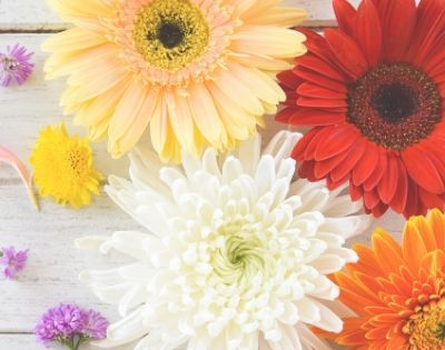 11 Encouraging and Hopeful Bible Verses About Spring