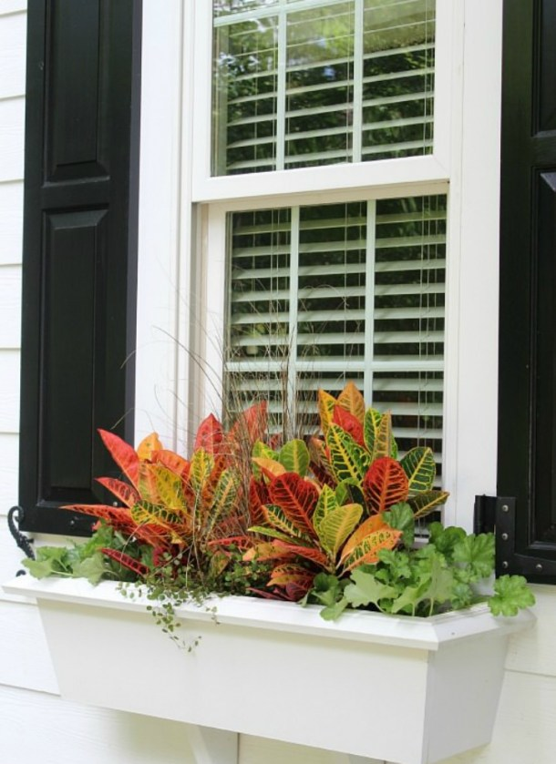 how to plant a fall window box