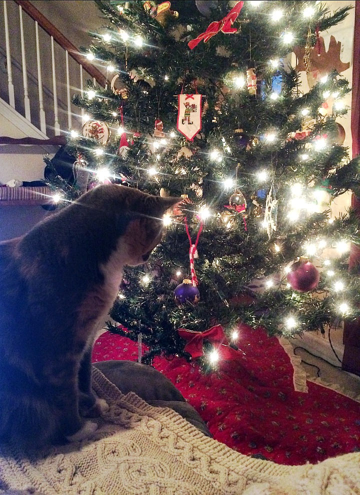 cat and tree