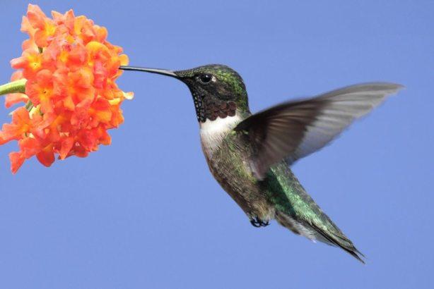 Website Content for Contractors-Hummingbird Effect