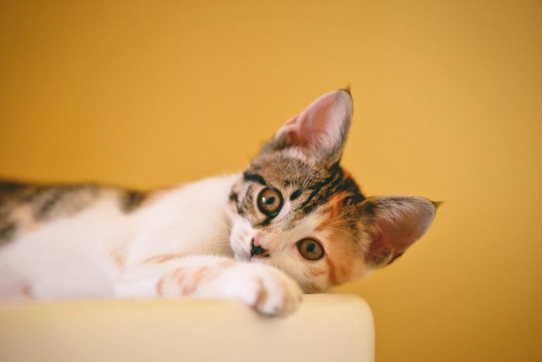 Cat spaying/neutering: Is it worth it?