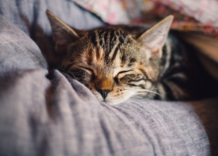 Important tips for raising a friendly cat