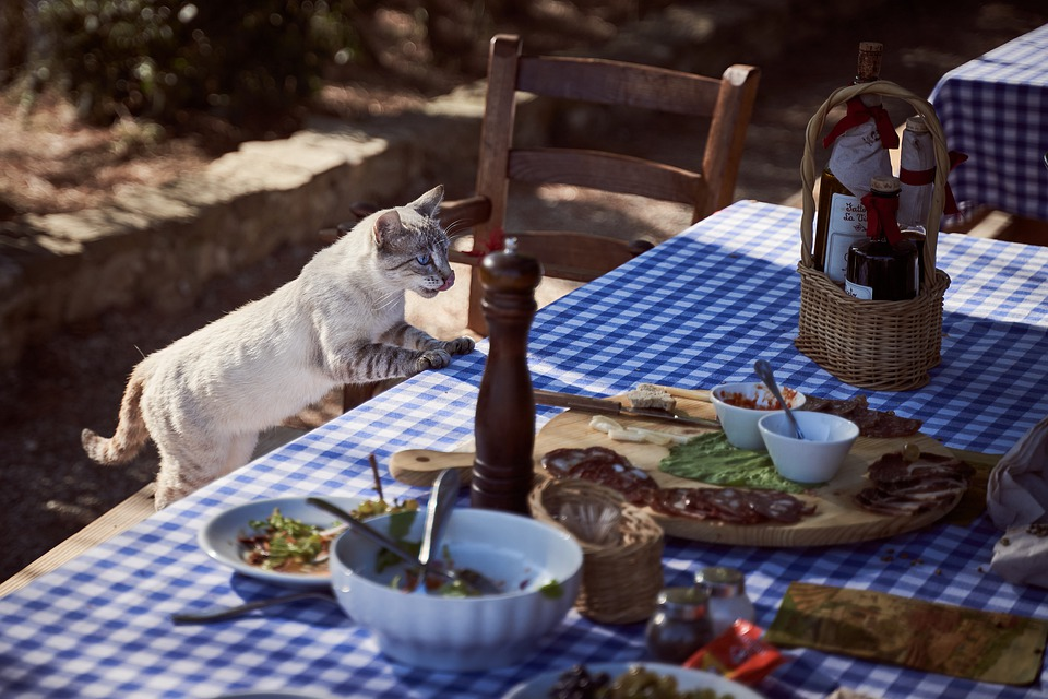 The ultimate guide on how to plan for thanksgiving as a cat owner