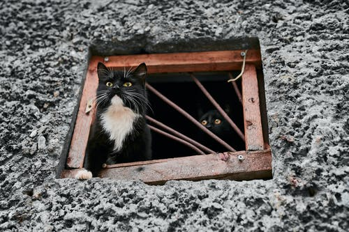 What attracts feral cats to your home