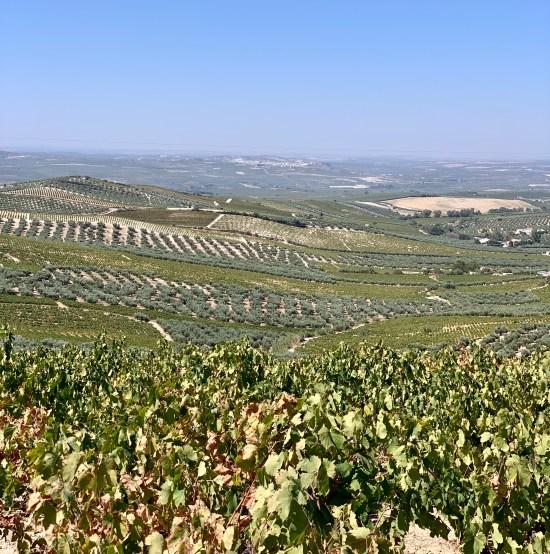 se ve un paisaje de viñas