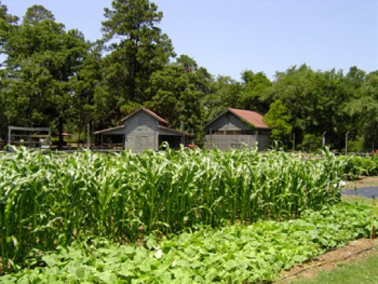 Heritage Farm - Sea Pines