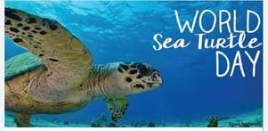 World Sea Turtle Day