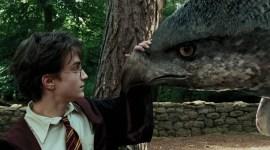 Top 10: Criaturas Mágicas del Mundo de 'Harry Potter'