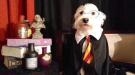 Ocho Perros Que Desean Ser Harry Potter