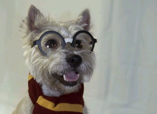 harry perrito potter feliz
