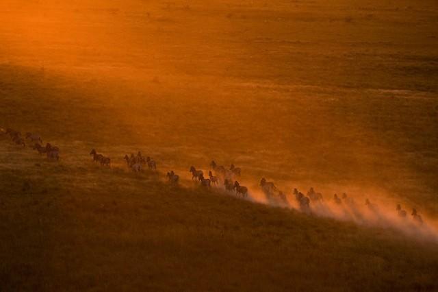 Grandes migrações de animais 10