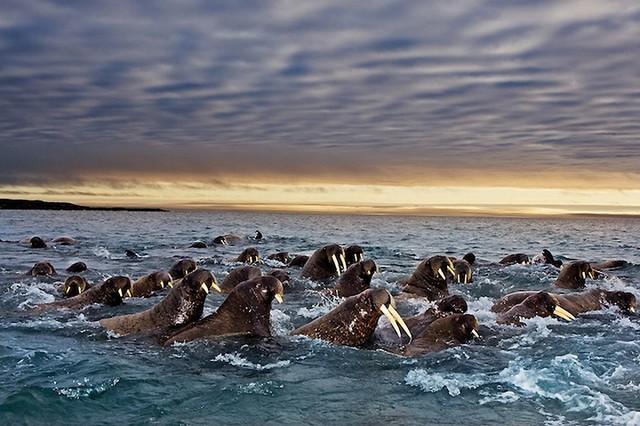 Grandes migrações de animais 13