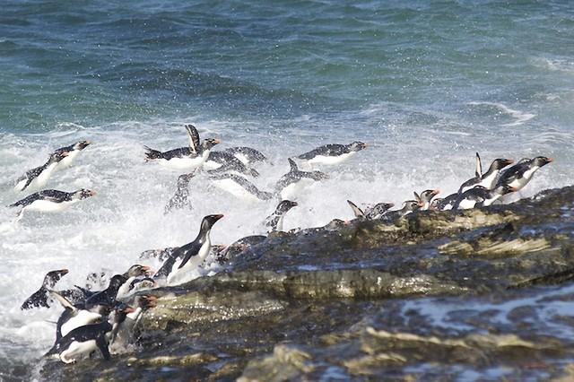 Grandes migrações de animais 07