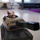 gatos_tanque
