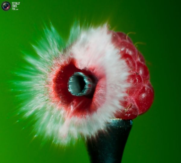 Fotos fantásticas de objetos explodindo